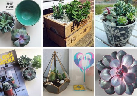 Ways to creatively display plants in your home